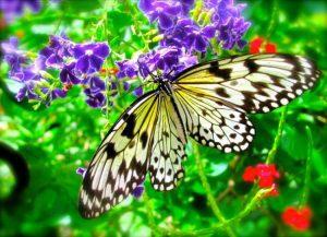 butterflyfarmaua