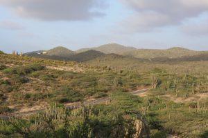 Jamanota Aruba