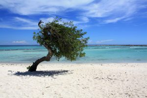 Things To Do Aruba - Baby Beach