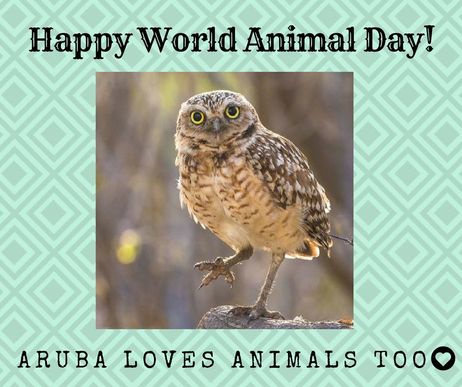 Happy World Animal Day from Aruba!