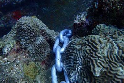 Aruba-Reef-Care-Foundation-june-19-2017-photo-by-jeffrey-kost-visitaruba-blog-400