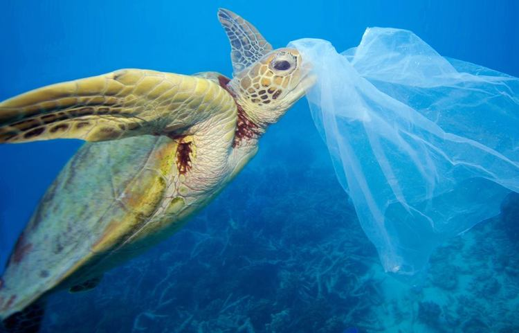 aruba-hi-winds-keep-the-beaches-and-ocean-clean-save-turtles-biodegradable-eco-friendly-products
