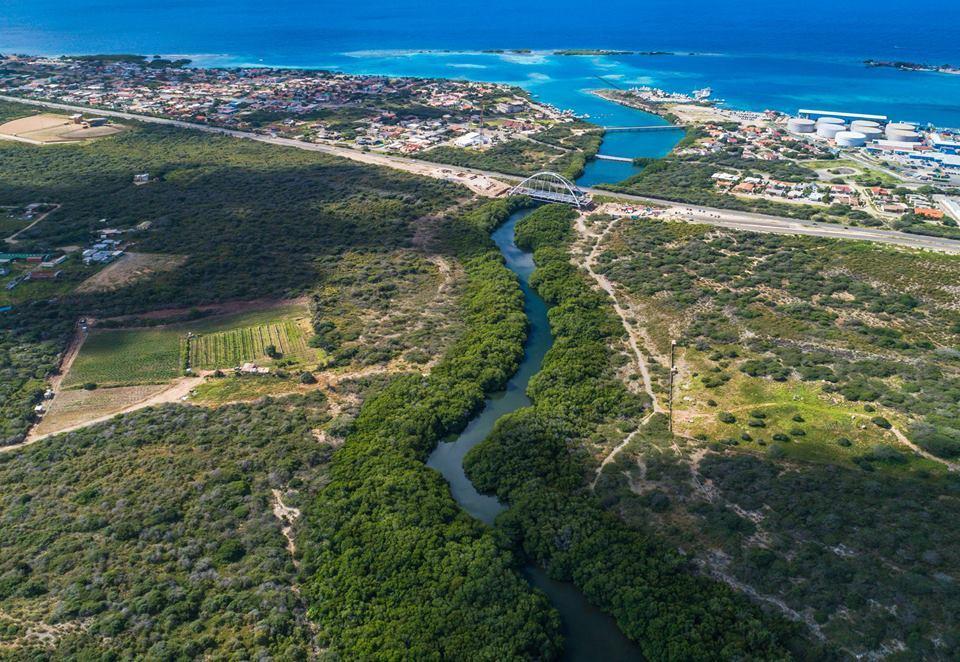 Mangroves-Spaans-Lagoen-Mangel-Halto-Aruba-Parke- Arikok-photo-visitaruba