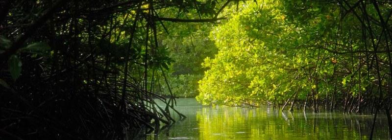 mangroves-spaans-lagoen-by-Henkjan-Kievit-DCNA-aruba-visitaruba