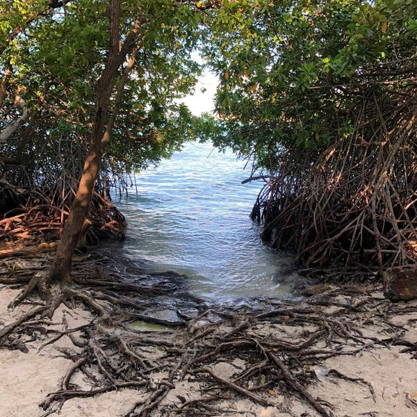 photo-by-havenshomeslifestyle-mangel-halto-aruba-mangroves-visitaruba