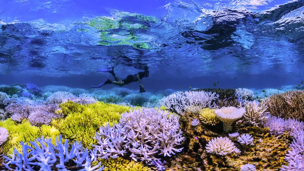 Aruba's Chasing Coral Event: A Campaign to Save Our Coral Reefs and Inspire Action