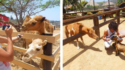 philips-animal-garden-aruba-feeding-photo-by-megan-rojer-visitaruba