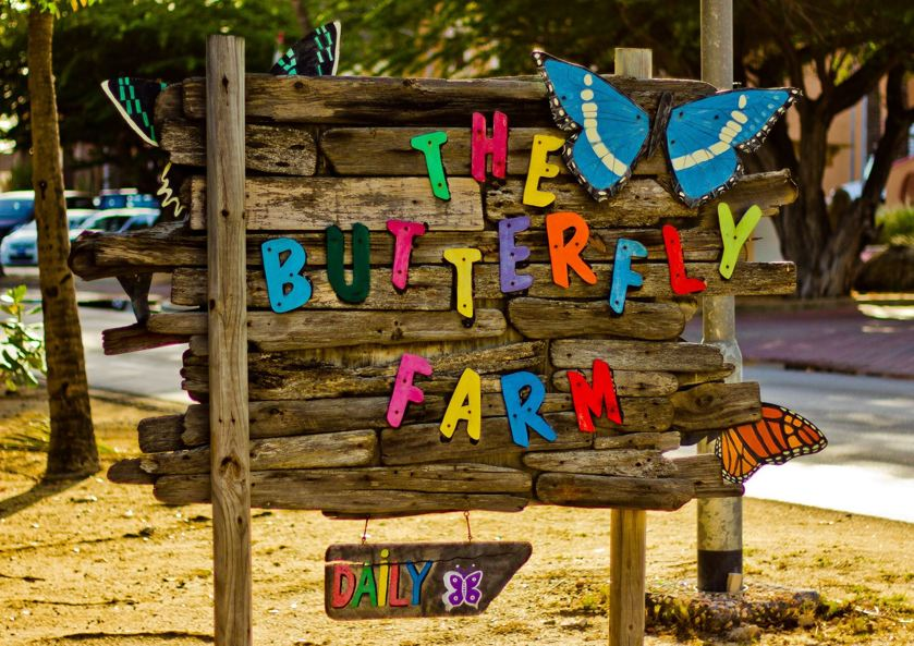 the-butterfly-farm-aruba-butterflies-blog-by-visitaruba