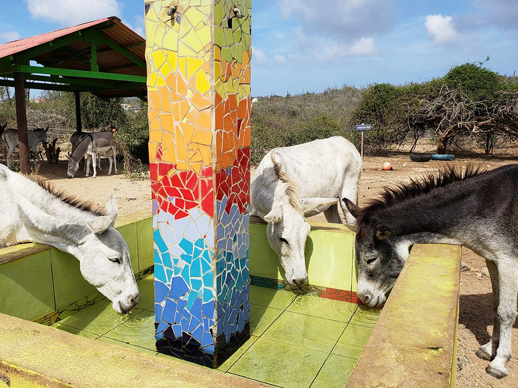 A Haven for Aruba's Donkeys