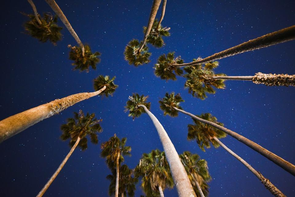 sky-trees-stars-tropical-night-time-in-caribbean-aruba
