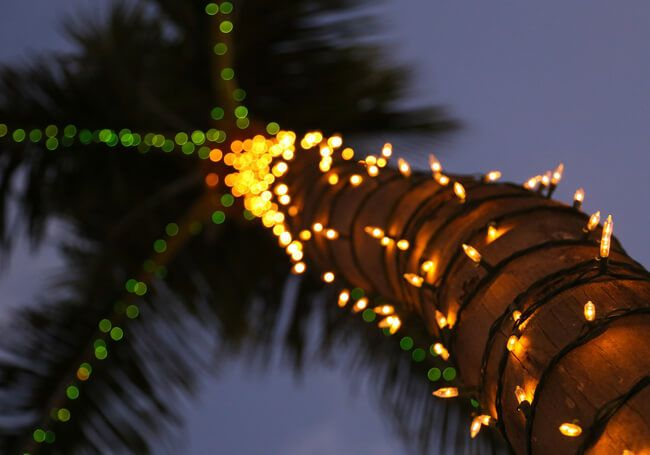 Discover the Holiday Magic in Aruba!