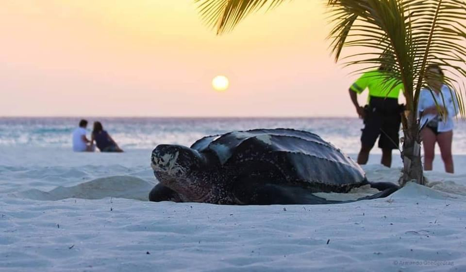 photo-by-de-palm-tours-aruba