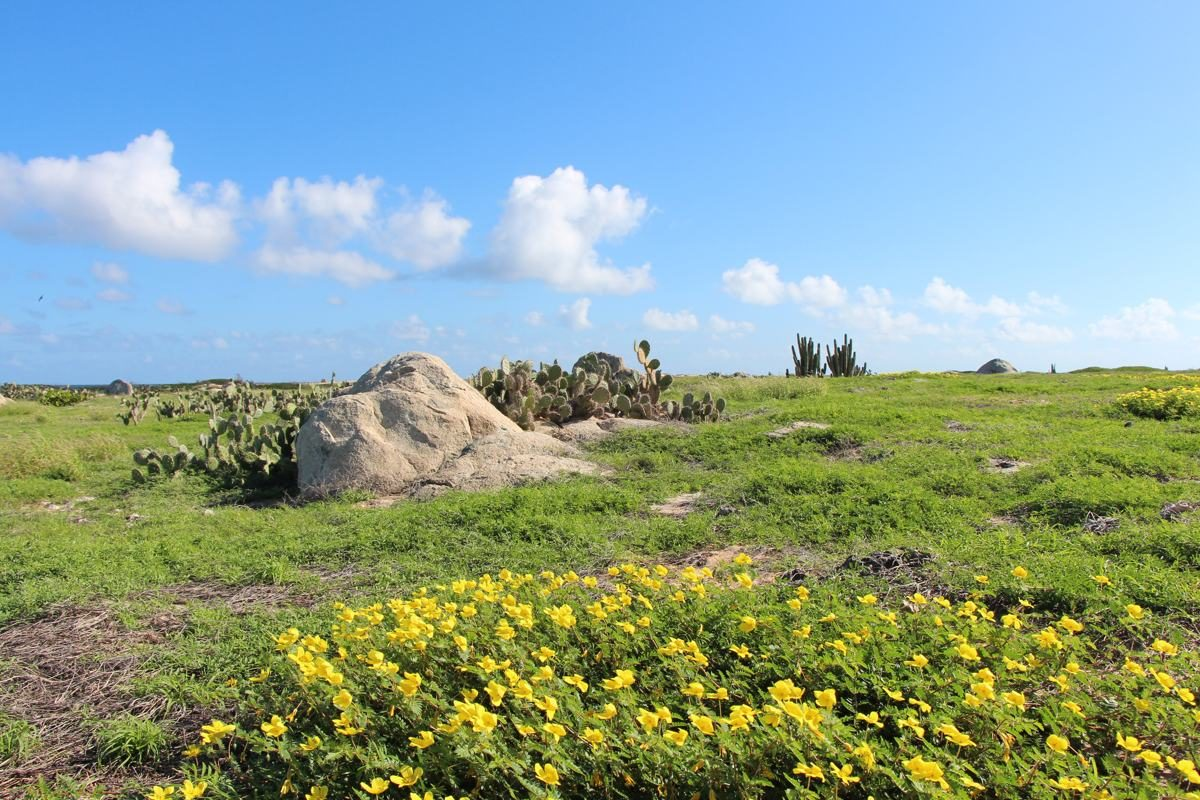 8 Nature Attractions to Visit in Aruba