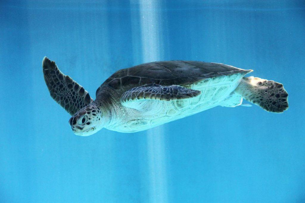 Aruba Baewatch: Animals Who Like to Hang by the Beach