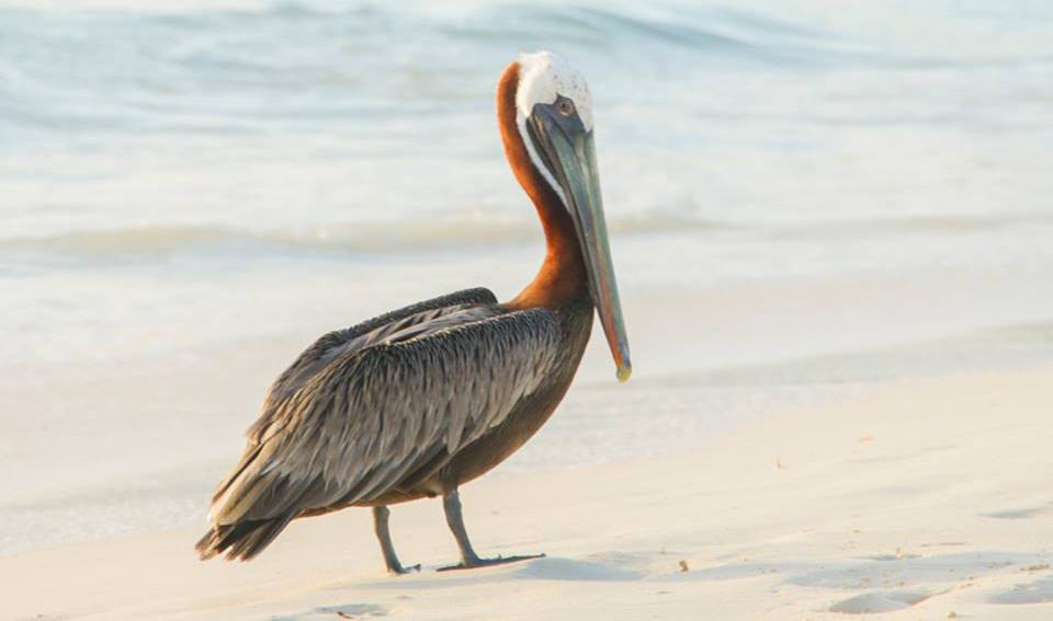 Meet the Animals That Live the Island Life in Aruba