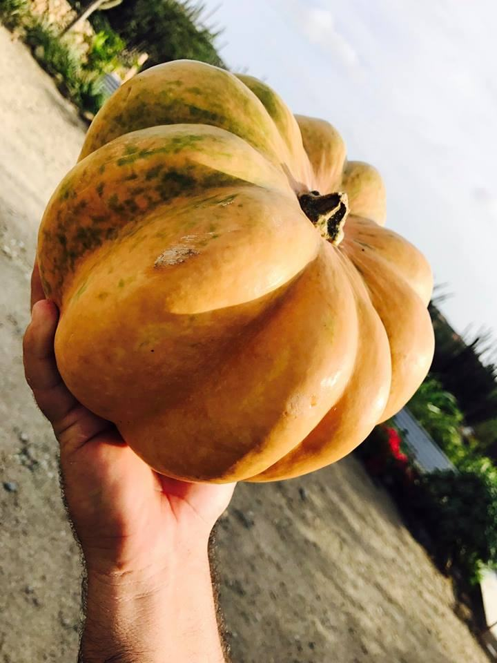 photo-by-Goshen-Aruba-pumpkins-from-one-happy-island-de-palm-tours