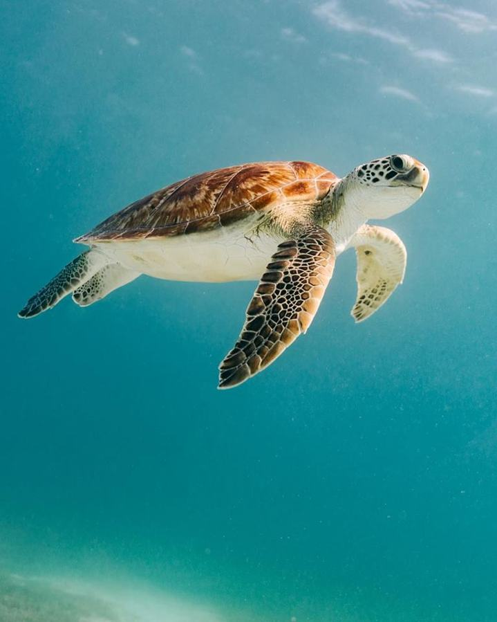 photo by jetlag creative studio - green sea turtle