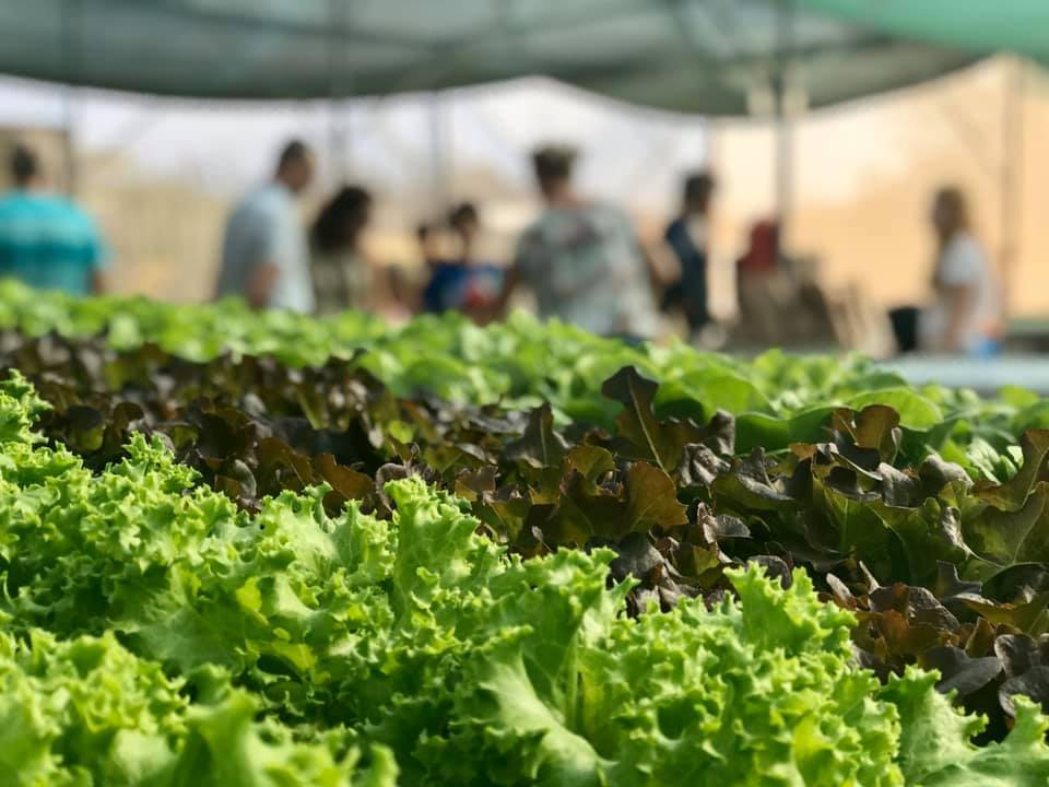 Fresh Produce is Springing up in Aruba