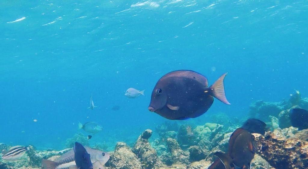 Let's Go Snorkeling in Aruba!