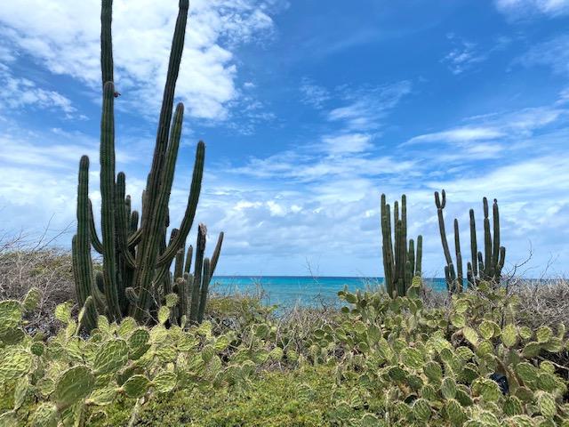 Aruba's Stabby Plants