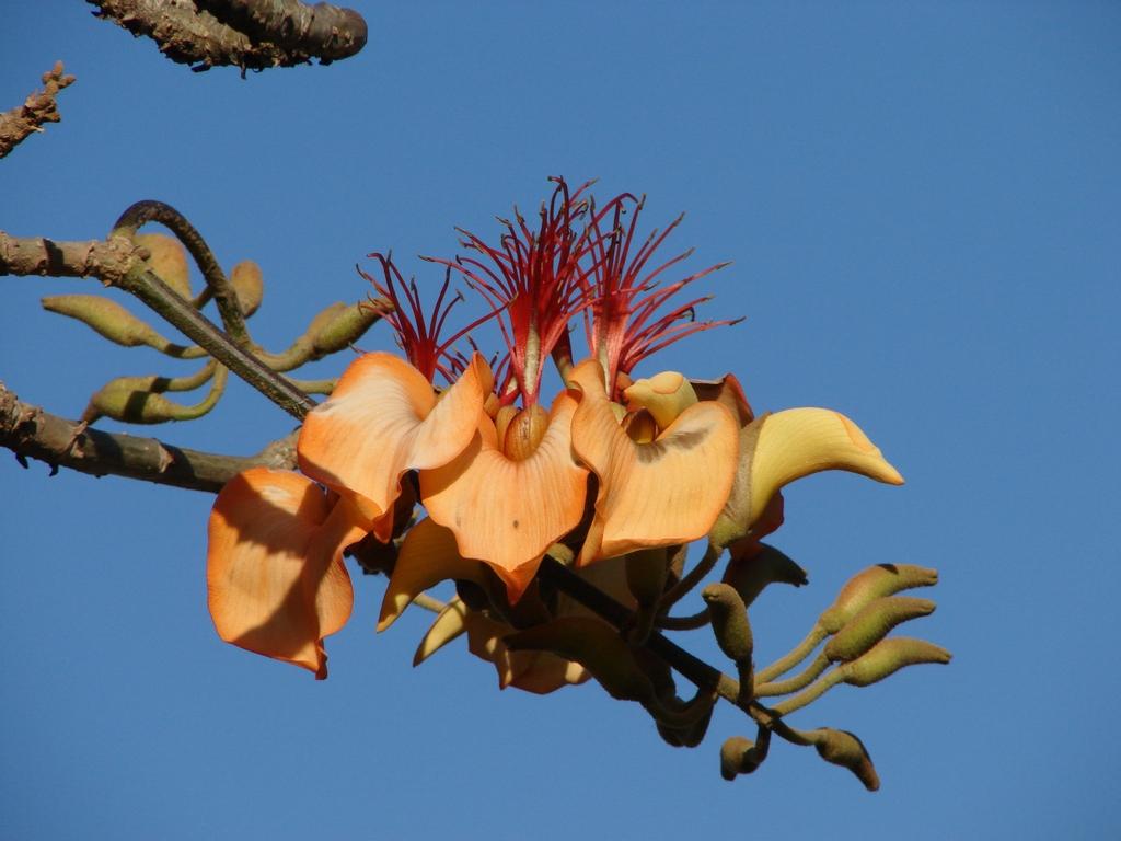 Learn more about Aruba's Palo di Boonchi
