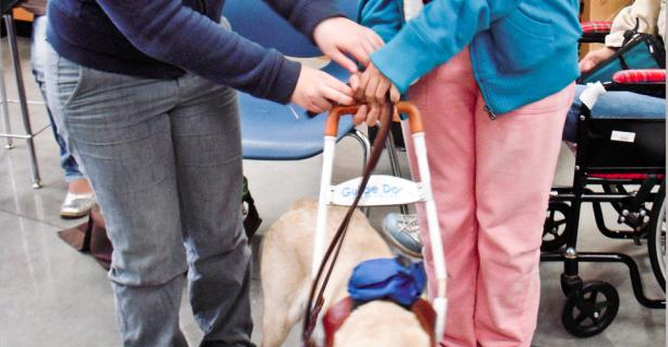 Essential Health Supplies Aruba provides information about travelling with your service animal