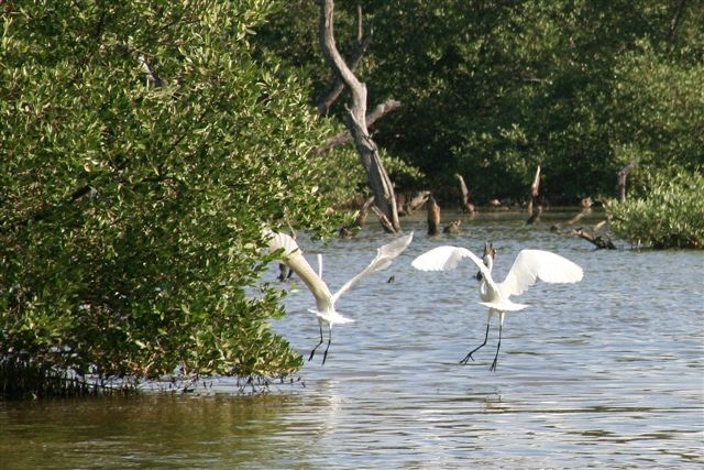 Hilton Aruba Celebrates World Environment Day Supporting Aruba Birdlife Conservation