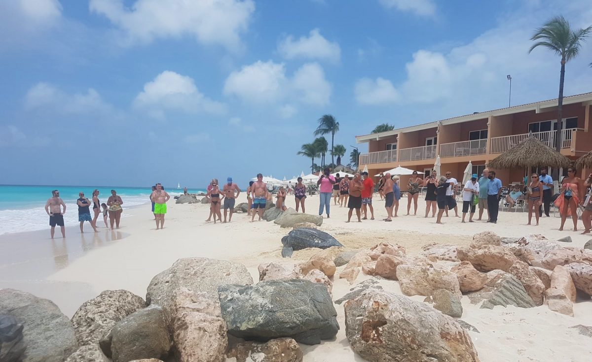 Leatherback Sea Turtle Nesting Event Spotted on Aruba's Shore