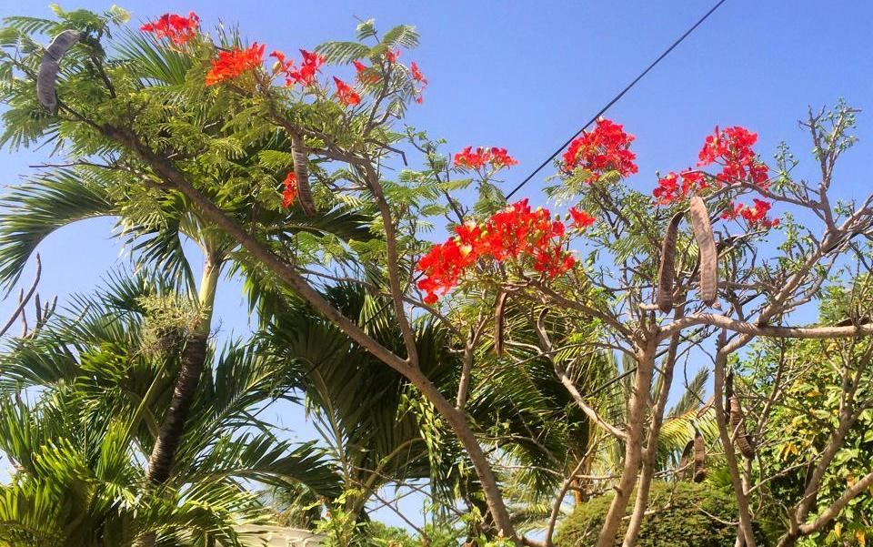 Red Flora.jpg