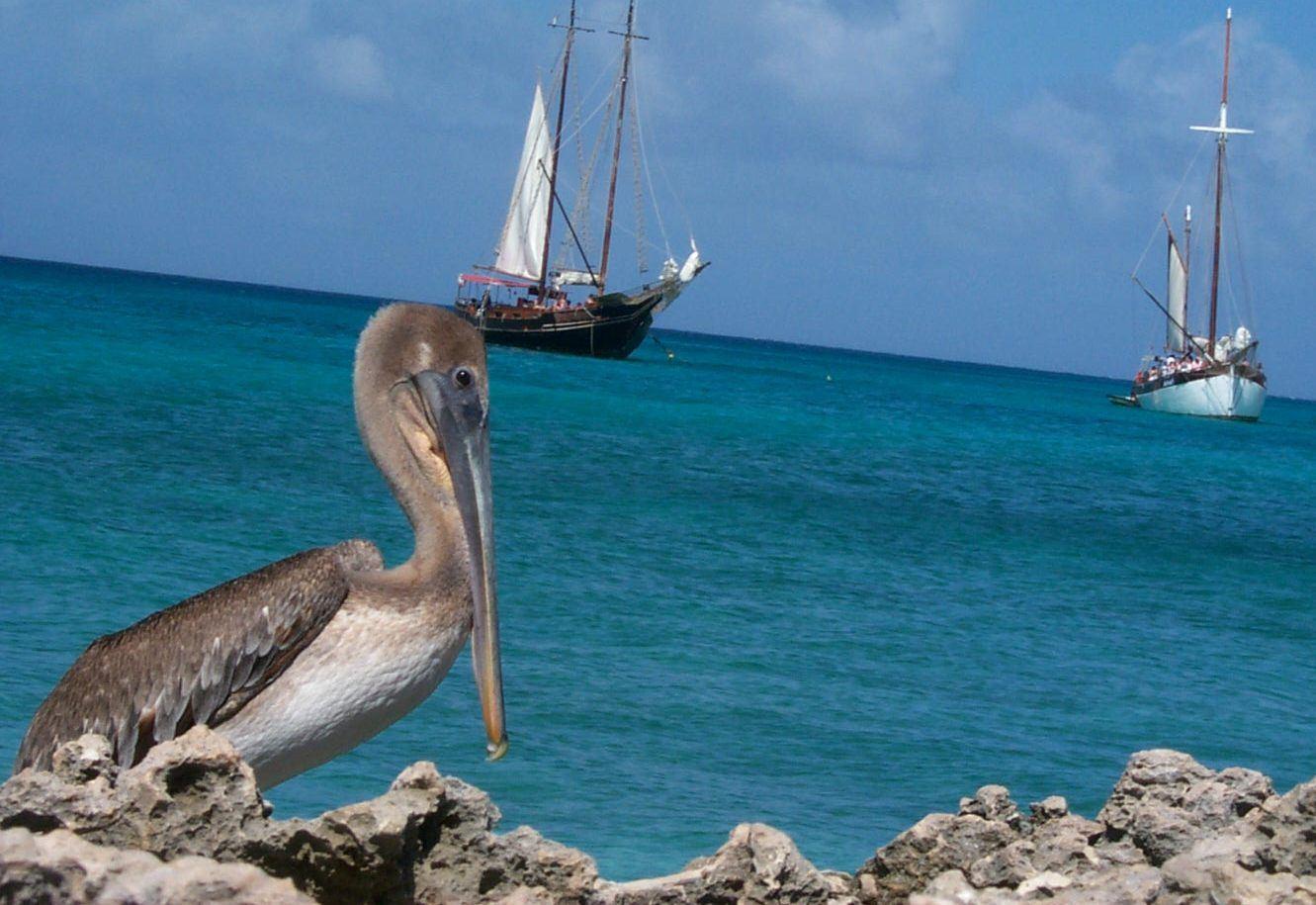 pelican9.jpg
