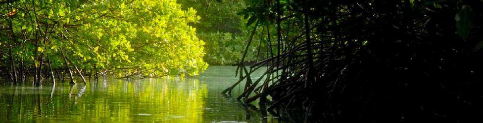Mangroves-and-Wildlife-of-Aruba-Environmental-Blog-VisitAruba.jpg