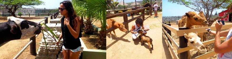 kid-family-friendly-things-to-do-aruba-VisitAruba.jpg