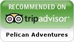 trip-advisor-pelican