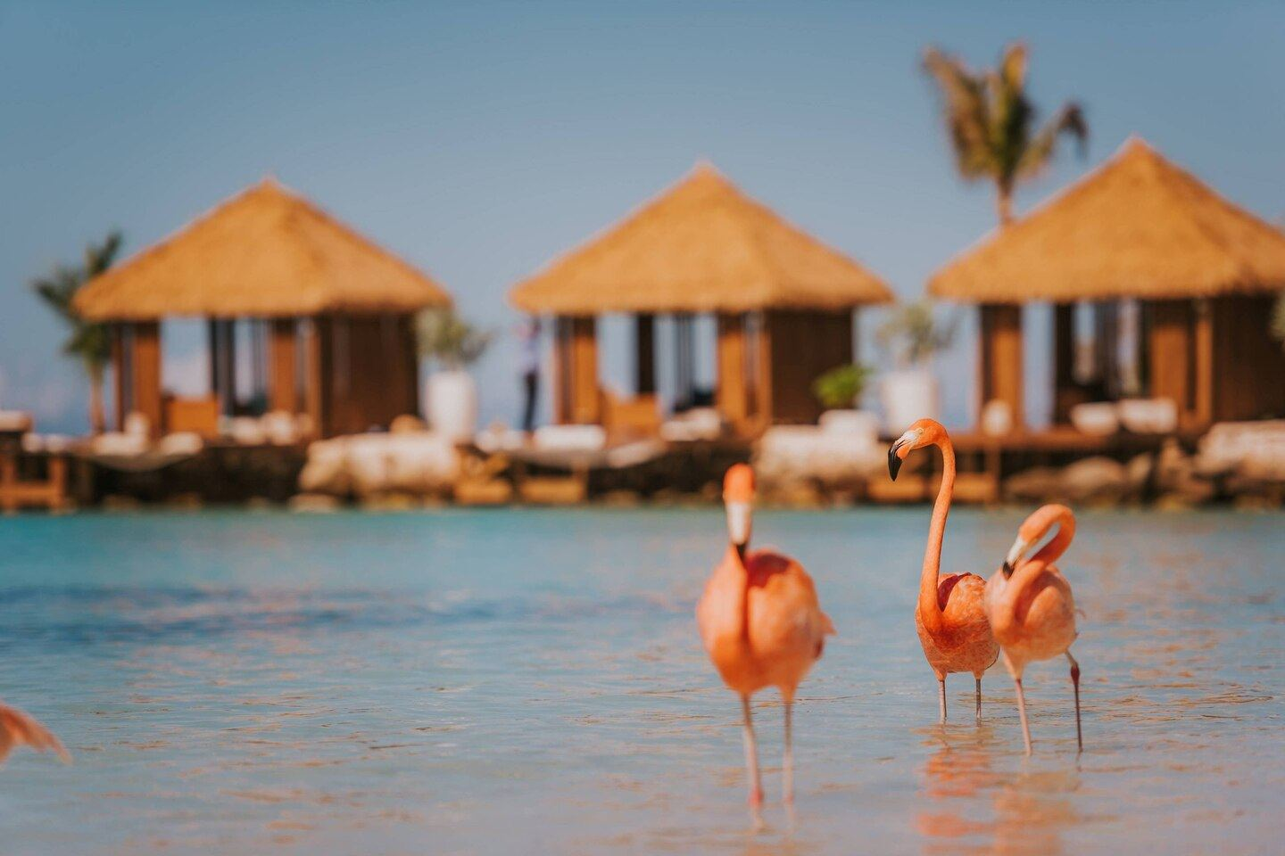 Renaissance Aruba Has Got You Covered