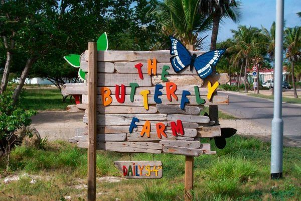 The Butterfly Farm