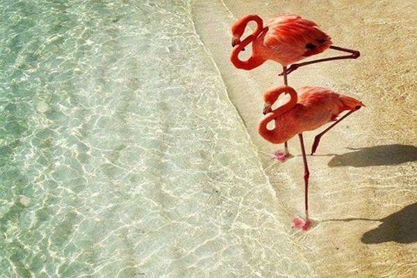 Two_flamingos_RI.jpg